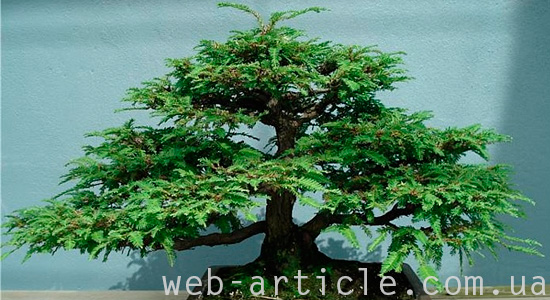 web-article-bonsai-01